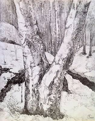 Early Spring Drawing - The Birches by Iya Carson
