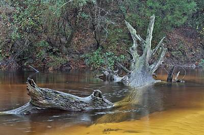 The Black Water River Print by JC Findley