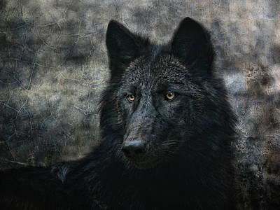 Black. Timber Wolf Photograph - The Black Wolf by Joachim G Pinkawa