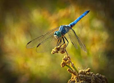 The Blue Dragonfly  Print by Saija  Lehtonen