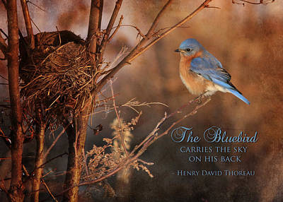 Bluebird Digital Art - The Bluebird by Lori Deiter