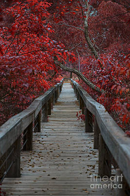 The Nature Center Photograph - The Boardwalk by Douglas Barnard