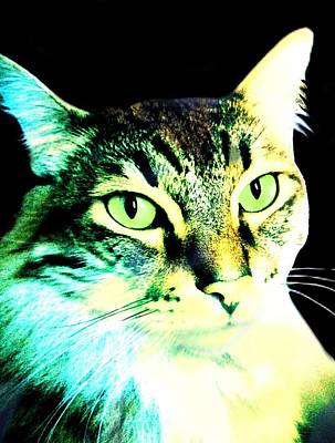 Cat Digital Art - The Boss by Cindy Edwards