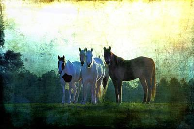 Quarter Horse Digital Art - The Boys by Jan Amiss Photography