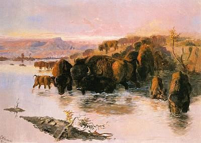 The Buffalo Herd Print by Charles Russell