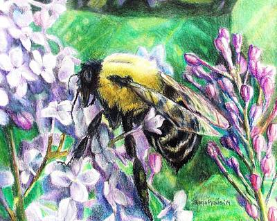 Lilacs Drawing - The Busy Bee And The Lilac Tree by Shana Rowe Jackson