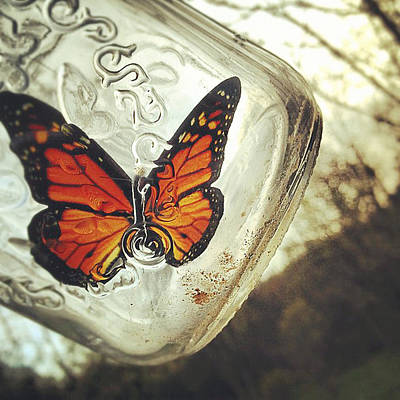 Insects Photograph - The Butterfly by Carrie Ann Grippo-Pike