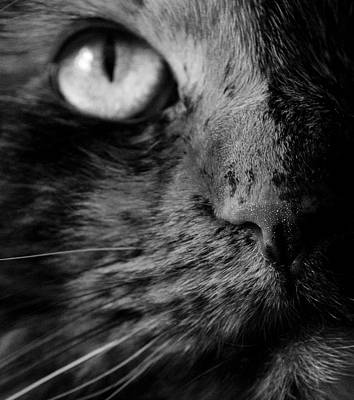 Cat Photograph - The Cat's Nose by Megan Luschen