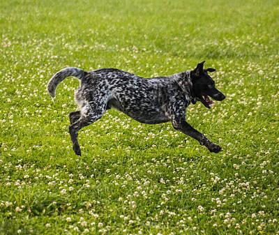 The Cattle Dog Ballet  Print by Howard Tenke