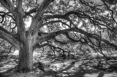 Benches Photograph - The Century Oak by Scott Norris