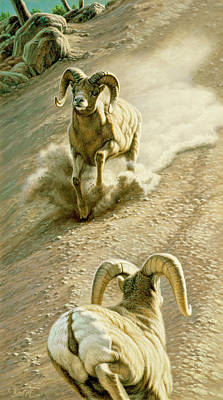 Bighorn Ram Painting - The Challenge by Paul Krapf