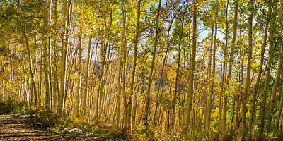Mountain Photograph - The Changing Aspens by Aaron Spong