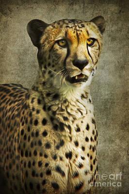 Cheetah Mixed Media - The Cheetah by Angela Doelling AD DESIGN Photo and PhotoArt