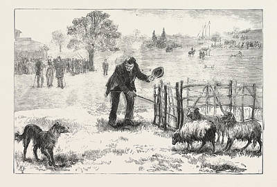 The Collie Dog Trials At The Alexandra Palace,  Penning Print by English School