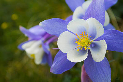 Flowers Photograph - The Columbine by Aaron Spong