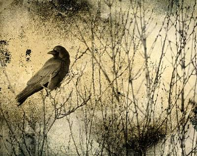 Corvid Digital Art - The Common Crow by Gothicolors Donna Snyder