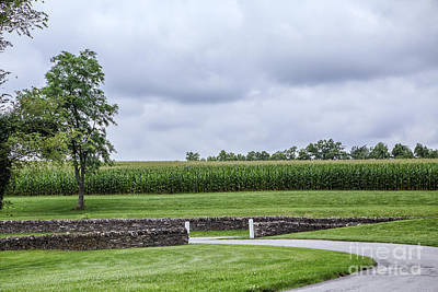 The Cornfield Print by Kay Pickens
