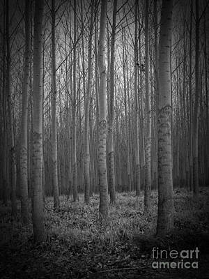 Neurotic Images Photograph - The Cottonwoods by Chalet Roome-Rigdon
