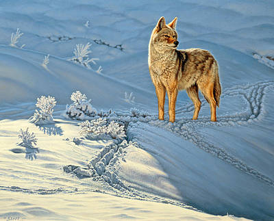Snow Painting - the Coyote - God's Dog by Paul Krapf