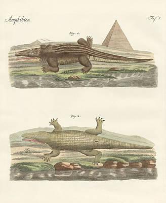 Crocodile Drawing - The Crocodile by Splendid Art Prints