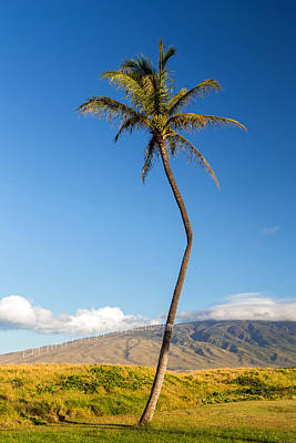 The Crooked Palm Tree Print by Pierre Leclerc Photography