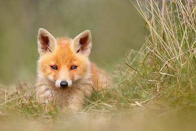 The Cute Kit Print by Roeselien Raimond
