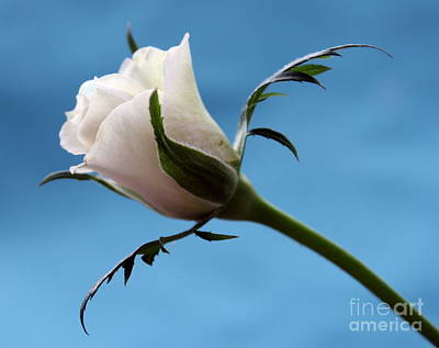 White Flower Photograph - The Dance by Krissy Katsimbras
