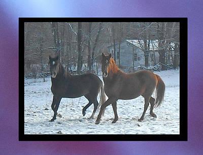 The Dancing Paso Fino Stallions Print by Patricia Keller