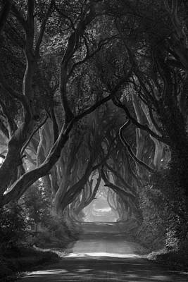 The Dark Hedges Print by Andy Gibson
