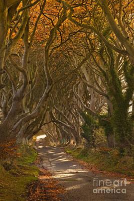 The Dark Hedges In Autumn Print by Derek Smyth