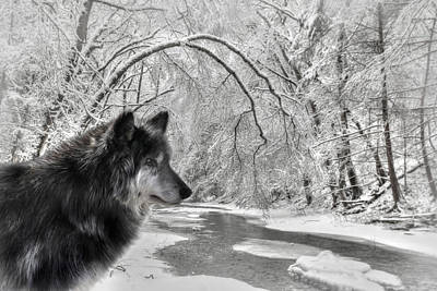 Beautiful Scenery Digital Art - The Dark Wolf by Lori Deiter