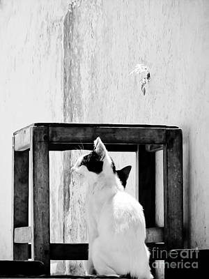 The Daydreamer Cat Print by Trish Oliveira