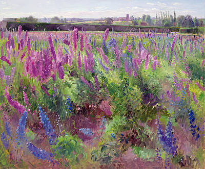 The Delphinium Field Print by Timothy Easton