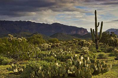 Rainy Day Photograph - The Desert Is Wearing A Carpet Of Green  by Saija  Lehtonen