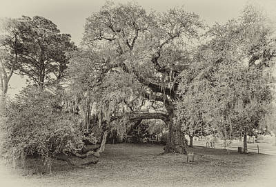 The Dueling Oak - A Place For Dying Bw Print by Steve Harrington
