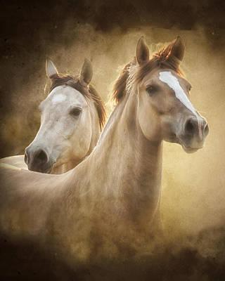 Horse Portrait Photograph - The Duns by Ron  McGinnis