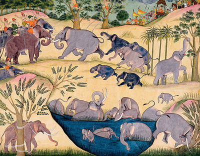 Seventeenth Century Drawing - The Elephant Hunt by Indian School