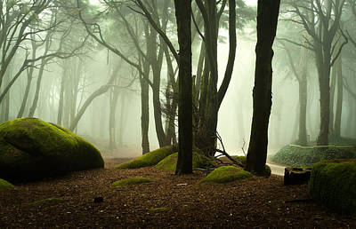 Elf Photograph - The Elf World by Jorge Maia