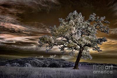 The Enchanted Tree - Blue Ridge Parkway Print by Dan Carmichael