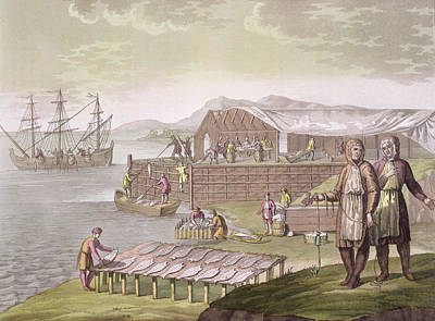 The Fishing Industry In Newfoundland Print by G Bramati