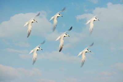 Of Birds Photograph - The Flight by Kim Hojnacki
