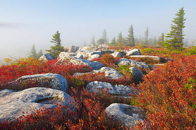 The Fog Clears At Dolly Sods Print by Bill Swindaman
