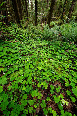 Forest Floor Photograph - The Forest Floor by Rick Berk