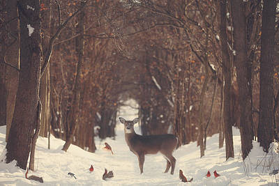 Winter-landscape Photograph - The Forest Of Snow White by Carrie Ann Grippo-Pike