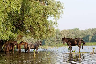 The Free Roaming Horses Of Maliuc Print by Martin Zwick