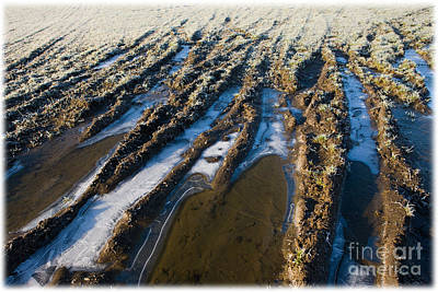 Liz Alderdice Photograph - The Frozen Earth by Liz  Alderdice