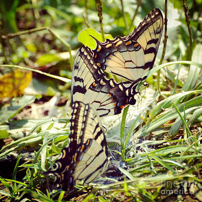 Butterfly Photograph - The Gathering by Kerri Farley