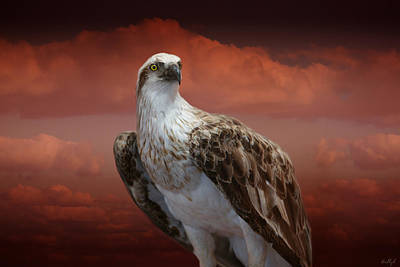 Photograph - The Glory Of An Eagle by Holly Kempe