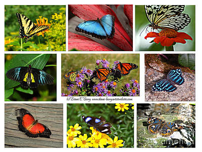 The Glory Of Butterflies 3 Print by Diane E Berry
