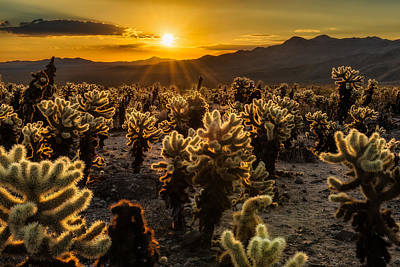 Cholla Photograph - The Glowing Garden by Guy Schmickle